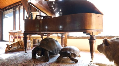 35-piano tortues