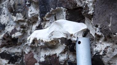59-Crâne